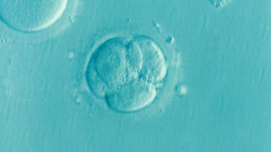 Difference Between 3 Day, 5 Day, and Genetically Tested Embryos